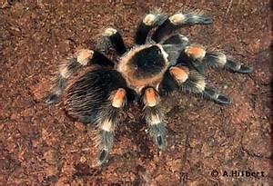 Pflanzen Gegen Spinnen :  ~ Lizthompson.info Haus und Dekorationen