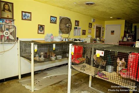 veterinary associations oppose illinois laws  pet store