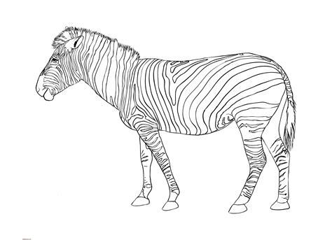 Dibujos De Cebras Para Colorear