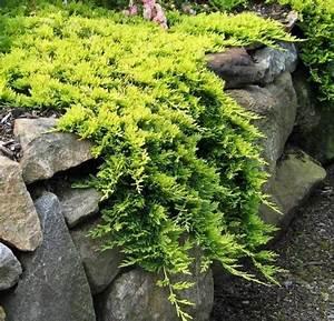 Arbuste Persistant Croissance Rapide : plantes couvre sol croissance rapide dans le jardin ~ Premium-room.com Idées de Décoration