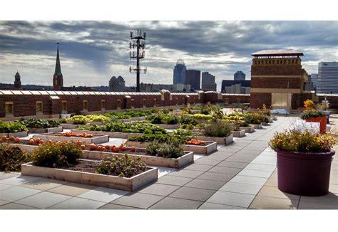 rothenberg rooftop garden greenroofscom