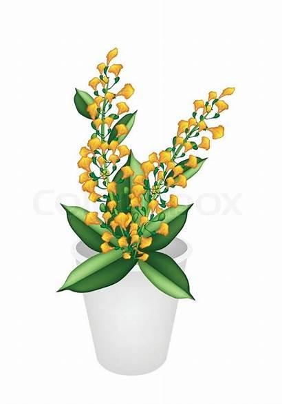 Flower Padauk
