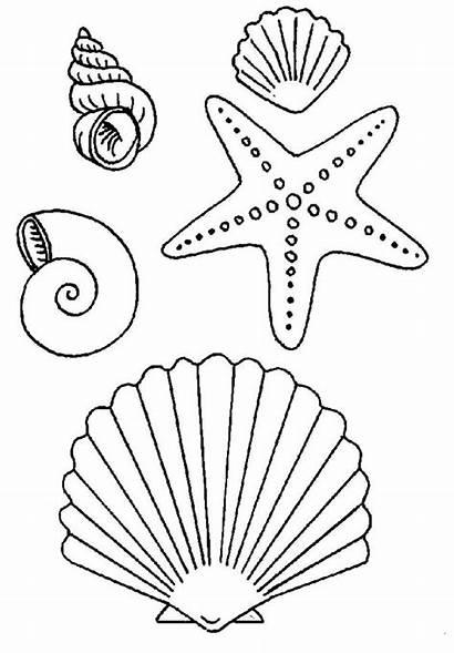 Starfish Coloring Types Seashells Many Pages Seashell