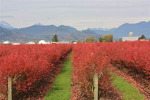 Crop Growth Stages  U2013 Blueberry Field Guide