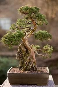 Pflege Bonsai Baum Indoor : bonsai baum kaufen und richtig pflegen einige wertvolle ~ Michelbontemps.com Haus und Dekorationen