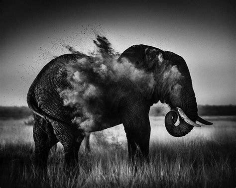 12096 professional photographs of animals maravillosas e imponentes fotos en blanco y negro de