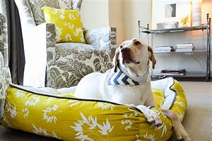 stylish dog beds for your lovely dogs homesfeed With pet trendy dog beds