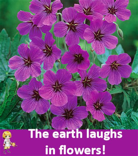 inspirational flower quotes  motivate  gardening cook