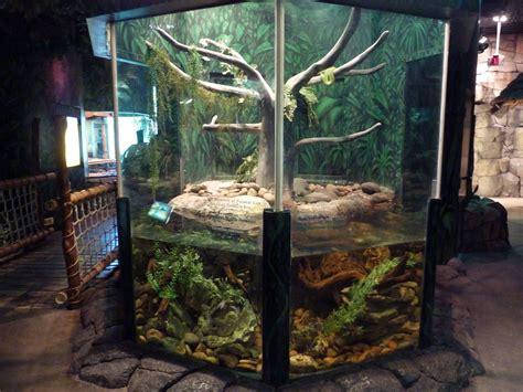 tree boa emerald exhibit enclosure reptile enclosures terrarium cage habitat python zoo amazon pet room herpetarium snake vivarium tank google