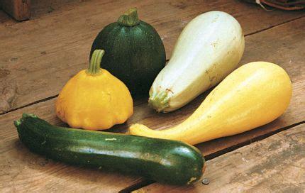 squash  growing  eating summer