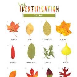 Printable Tree Leaves Identification Chart