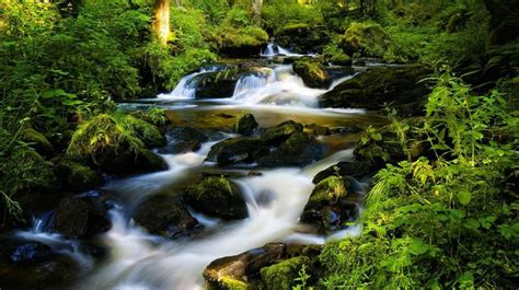 13 Best Images About World Famous Forests On Pinterest
