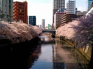 strolling for meguro river tokyo japan world for travel