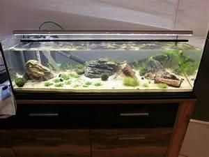 Aquarium Led Beleuchtung : aquarium abdeckung selbst bauen ihr traumhaus ideen ~ Frokenaadalensverden.com Haus und Dekorationen