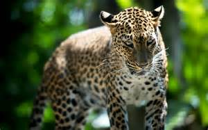 animals awesome wallpapers