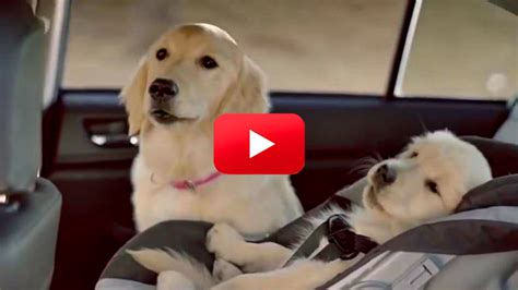 Subaru Commercial With Dogs  Autos Post
