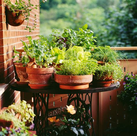 patio plant 35 patio potted plant and flower ideas creative and lovely photos