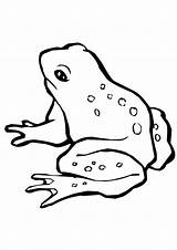 Coloring Frog Pages Harlequin Toad Printable Colouring Print Frogs Preschoolers Animal Snacks Parentune Printables Animals Worksheets sketch template