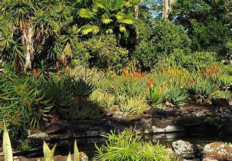 kauai botanical gardens the moir gardens a spectacular botanical park in poipu