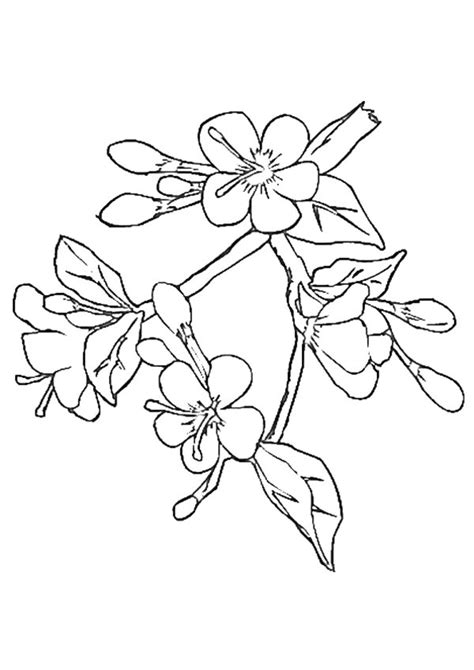 Cherry Blossom Branch Drawing at GetDrawings | Free download