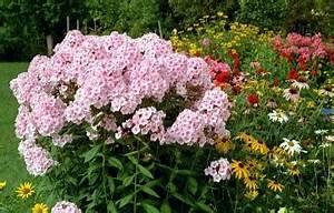 Lang Blühende Pflanzen : garten abc ~ Eleganceandgraceweddings.com Haus und Dekorationen