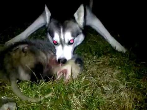 the trapped opossum possum bite www pixshark images galleries with a bite