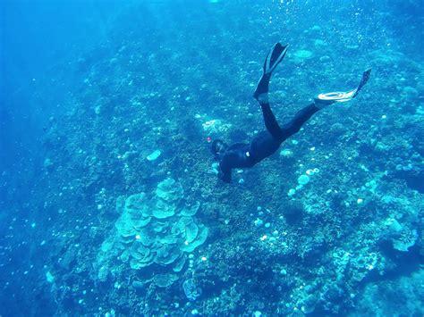 snorkeling    scuba diving
