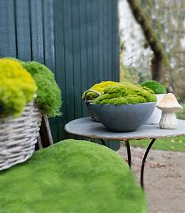 Moos Im Garten : moos lime green top pflanzen kaufen baldur garten ~ Pilothousefishingboats.com Haus und Dekorationen