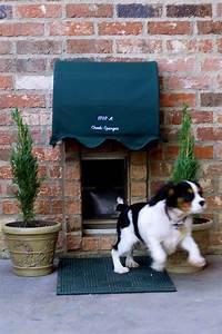 Dog door canopyadorable petaholic pinterest for Dog house with a door