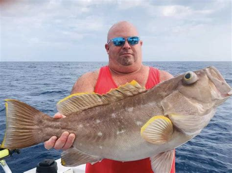 grouper caught offshore fired dropping charters yellow deep week