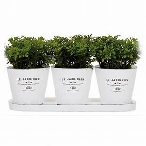 Kitchen indoor herb planters eatwell101 for Kitchen herb planters
