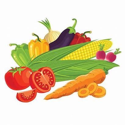 Vegetables Clip Vector Raw Illustration Illustrations Vectors