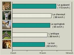 Vitesse Des Animaux : les animaux les plus rapides du monde ~ Medecine-chirurgie-esthetiques.com Avis de Voitures