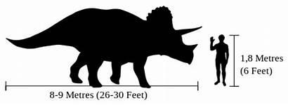 Triceratops Human Tyrannosaurus Compared Comparison Difference Diffen