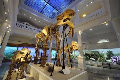 O noapte la muzeu: 20 de copii au dormit lângă scheletul de Deinotherium la Muzeul Antipa