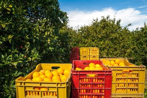Citrus Crop Forecast Florida All Oranges At 54 Million. Payroll Services Comparison Dentist Salem Nh. Closing Prices Of Stocks By Date. American School Of Business Shreveport. Is Creating A Website Free Monitor My Credit. Mineola Community Treatment Center. Storage Units In Los Angeles Ca. Cox Cable Henderson Nevada Private Loan Rates. Do I Need A Lawyer To File For Divorce