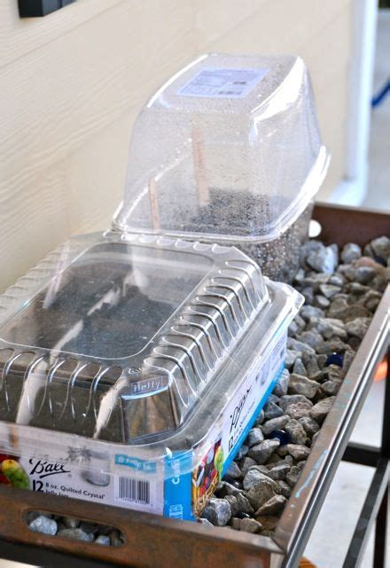 ideas  recycling containers growing seedlings