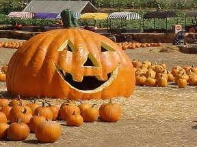 Pumpkin Patch Portland 2017 by Lighting Of Giant Jack O Lanterns Kicks Off Halloween