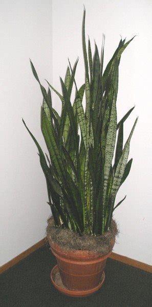 low light houseplants types of indoor plants for low light