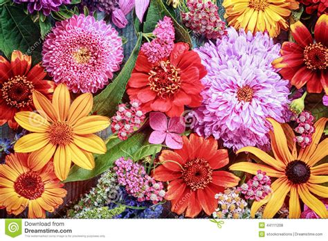 big colorful flowers 28 best big colorful flowers pictures of colorful flowers beautiful flowers big selection