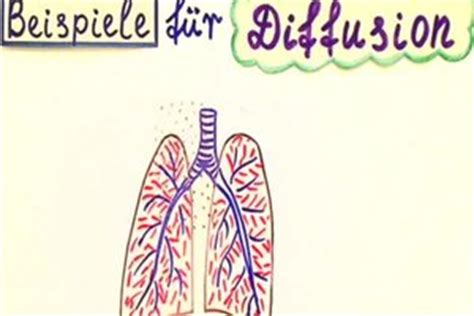 was ist diffusion diffusion in der biologie definition und beispiele