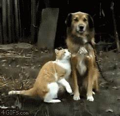 Cat Kiss GIF - Find & Share on GIPHY