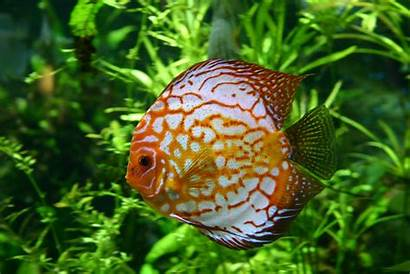 Fish Scales Colourful Wallpapers Desktop