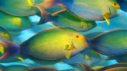 Fishes Sealife Underwater Px Ocean Fish Sea