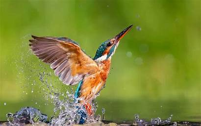 Kingfisher Flying Wallpapers Birds Bird Colorful Resolution