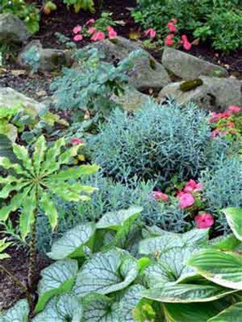 border plants for shade border gardens