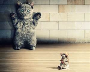 Cats Rodents Mice Kittens Humor Animals situation funny ...