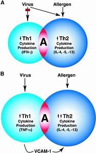 Virus Diagram Labeled