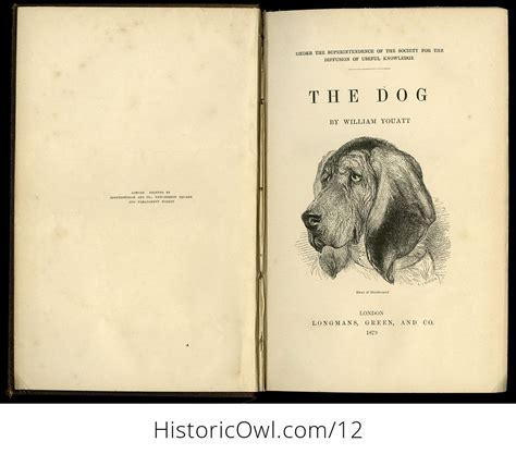 Antique Illustrated Book The Dog By William Youatt C1879