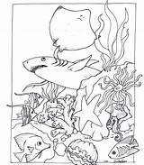 Habitat Coloring Pages Pond Animal Animals Desert Ocean Wildlife Drawing Fish Template Getcolorings Sea Printable Print Getdrawings Loaves Sheets Sketch sketch template